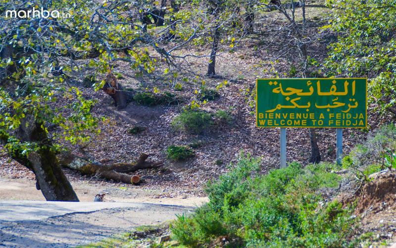 Découvrez Feija, l'une des plus belles forêts au monde