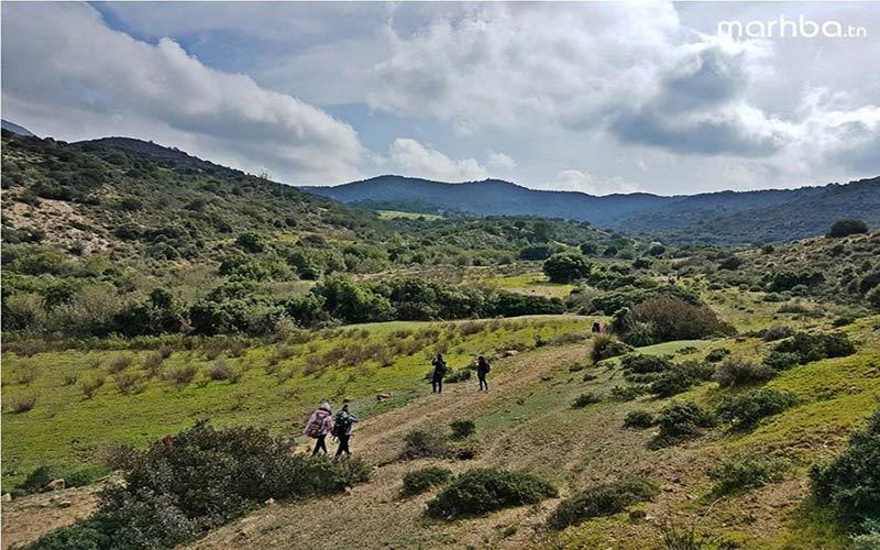 Sur la route des pins d'Alep Trek @ Sidi Medien Zaghouan
